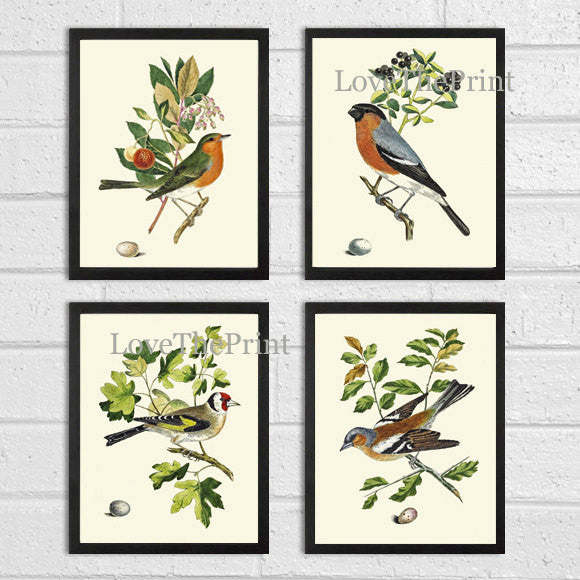 Bird Print Art 9 Beautiful Songbird Egg Green Tree Branch Ivory Background Bedroom Living Dining Room Hallway Office Kitchen Wall Decor CJ