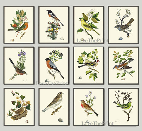 Antique Bird Print Set of 12 Wall Art Beautiful Tree Branch Egg Berries Botanical Green Forest Garden Nature Illustration Decor to Frame JC