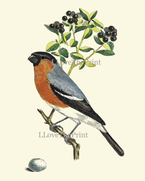 Bird Egg Print Wall Art 13 Antique Botanical Green Nature Berries Fruit Vintage Illustration Picture Bookplate Book Page Home Room Decor CJ