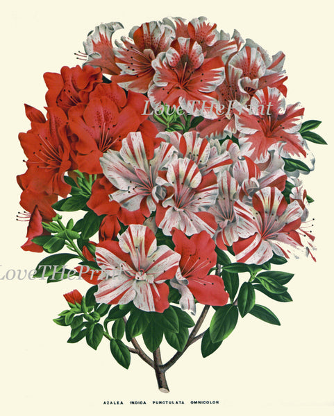 Botanical Print Set of 4 Flowers Art Beautiful Large Azalea Blooming Plants Spring Summer Garden Nature Vintage Wall Home Decor
