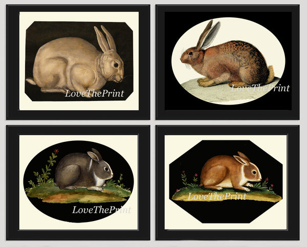 Rabbit Bunny Print SET of 4 Wall Art Prints Beautiful Antique Home Room Decor Picture Illustration Book Plate Child Pet Green Nature