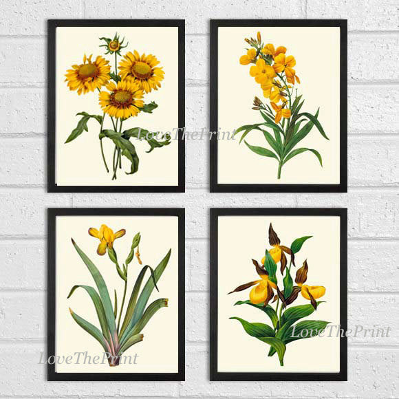 Botanical Print Set of 4 Art  Redoute Antique Beautiful Yellow Blanket Flower Wall Flower Iris Lady's Slipper Daisy Home Room Wall Decor