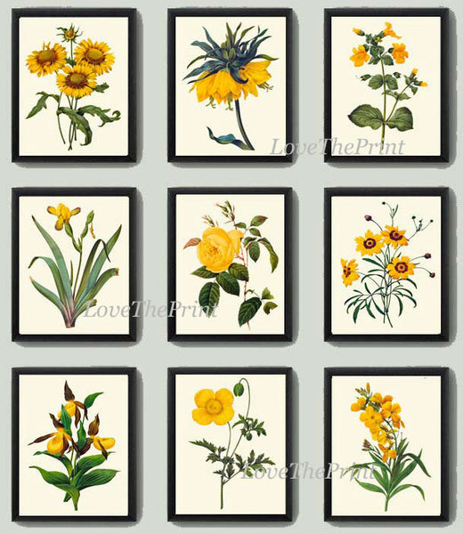 Botanical Print Set of 9 Art  Redoute Antique Beautiful Yellow Lady's Slipper Blanket Flower Coreopsis Iris Rose Daisy Home Wall Decor