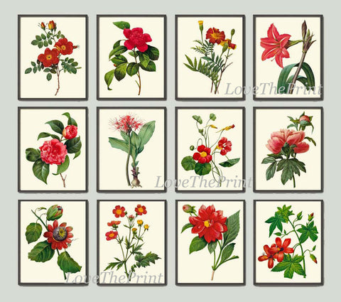 Botanical Print Set of 12 Art  Redoute Antique Beautiful Flowers Red Camellia Rose Marigold Nasturtium Peony Hibiscus Room Wall Decor