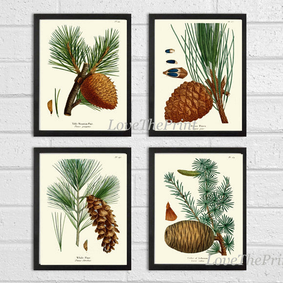 BOTANICAL Print SET of 4 Art Prints  Redoute Antique Pinecone Pine Tree Green Forest Nature Living Bedroom Home Room Wall Decor to Frame