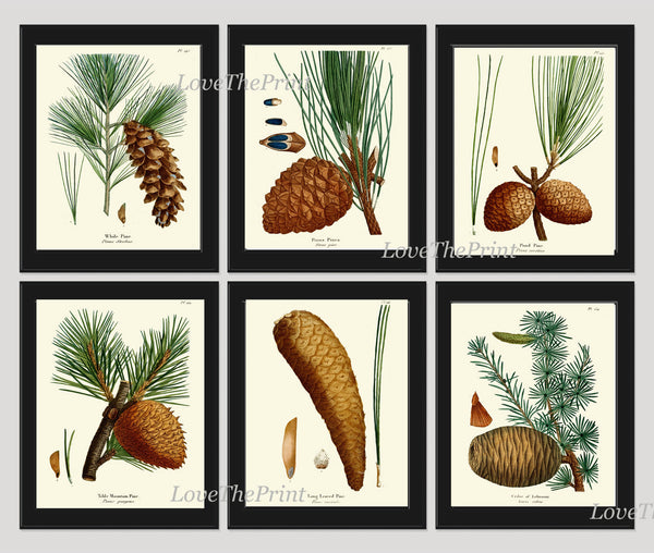 BOTANICAL Print SET of 6 Art Prints  Redoute Antique Pinecone Pine Tree Green Forest Nature Living Bedroom Home Room Wall Decor to Frame