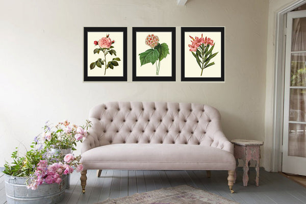 Botanical Print Set of 3 Art  Redoute Antique Beautiful Flowers Pink Coral Rose Snowball Laurier Rose Garden Plants Home Room Wall Decor