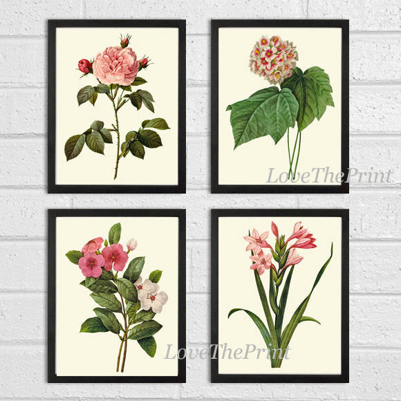 Botanical Print Set of 4 Art  Redoute Antique Beautiful Flowers Pink Coral Laurier Rose Snowball Periwinkle Gladiolus Home Wall Decor