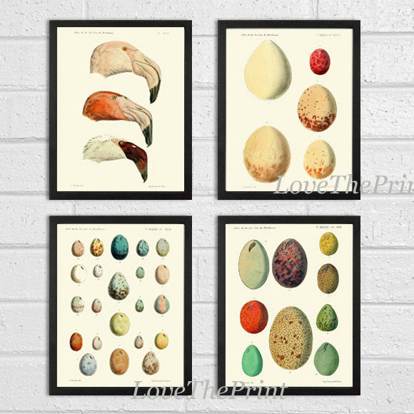 Botanical Print Set of 4 Art  Beautiful Antique Bird Egg Illustraion Beige Ivory Home Room Bedroom Living Room Office Home Wall Decor
