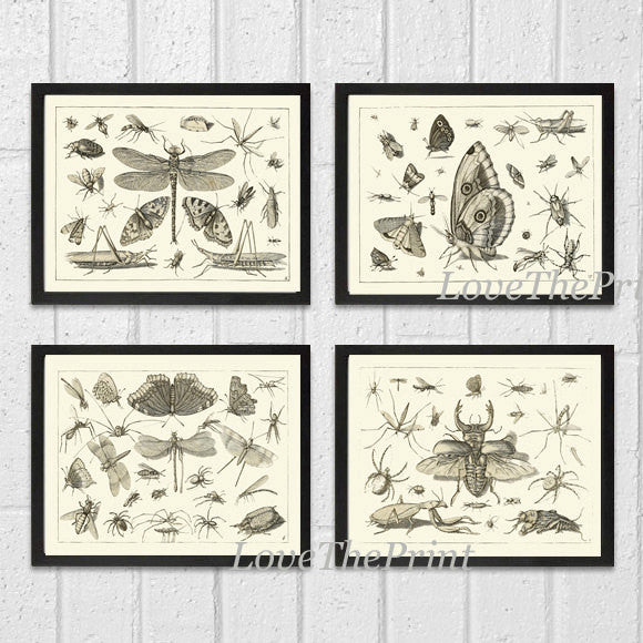 Botanical Print Set of 4 Art  Beautiful Antique Dragonfly Butterfly Beetle Moth Spider Spring Summer Garden Insects Home Wall Decor