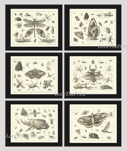 Botanical Print Set of 6 Art  Beautiful Antique Dragonfly Butterfly Beetle Moth Spider Spring Summer Garden Insects Home Wall Decor