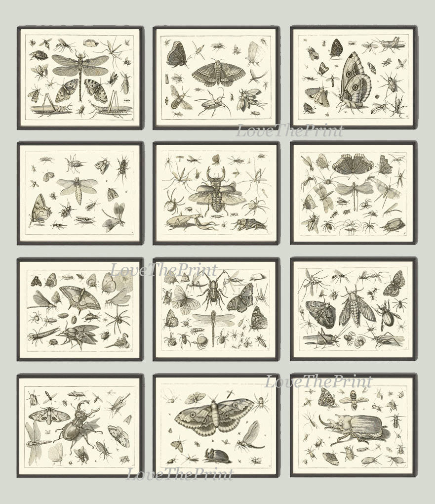 Botanical Print Set of 12 Art  Beautiful Antique Dragonfly Butterfly Beetle Moth Spider Spring Summer Garden Insects Home Wall Decor