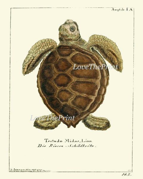 Botanical Print Set of 4 Art  Beautiful Antique Turtles Tortoise Reptile Pet Desert Nature Natural Science Illustration Home Wall Decor