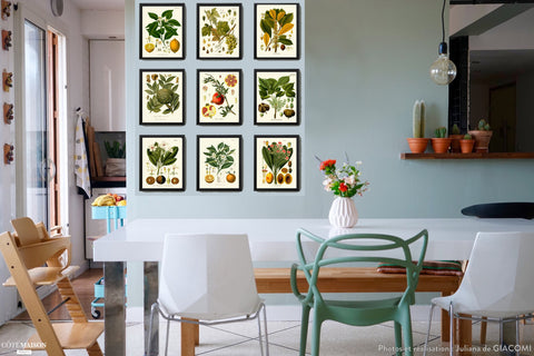 Botanical Print Set of 9 Art  Antique Beautiful Lemon Grape Pomegranate Orange Tropical Fruit Nut Tree Flowers Home Room Wall Decor KOH