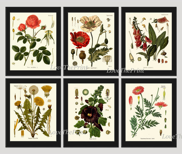 Botanical Print Set of 6 Art  Beautiful Antique Red Rose Large Black Hollyhock Dandelion Flowers Bedroom Dining Living Room Wall Decor