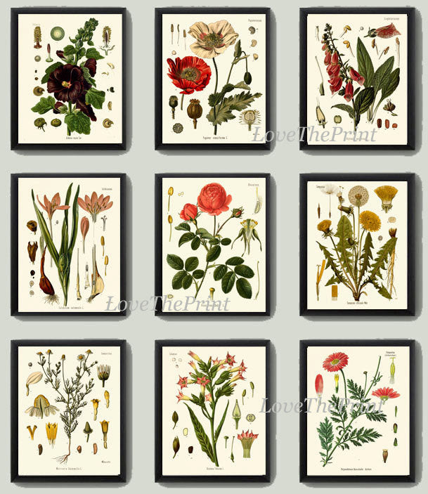 Botanical Print Set of 9 Art  Beautiful Antique Red Rose Hollyhock Poppy Cammomile Dandelion Flowers Office Hallway Room Wall Decor