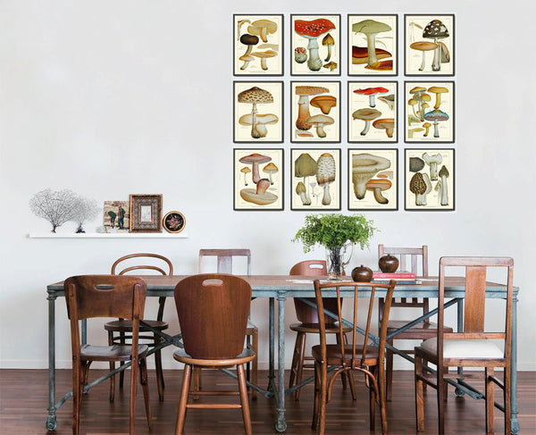 Mushroom Print Set of 12 Art  Antique Beautiful Red Aqua Brown Fungi Mushrooms Truffle Food Cooking Kitchen Dining Home Room Wall Decor
