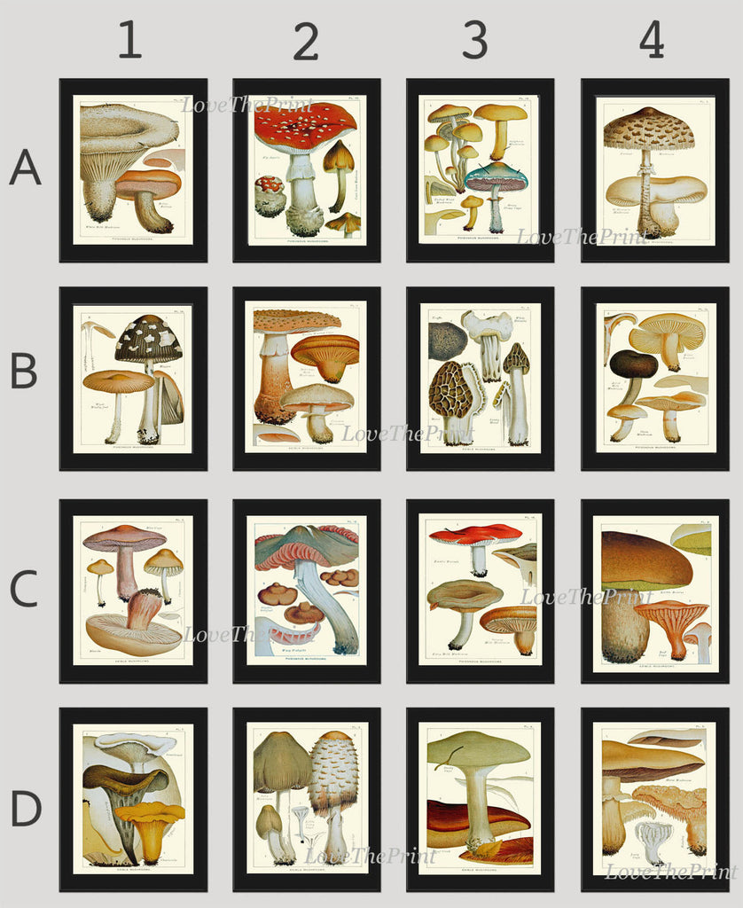 Mushroom Print Set of 16 Art  Antique Beautiful Red Aqua Brown Fungi Mushrooms Truffle Food Cooking Kitchen Dining Home Room Wall Decor