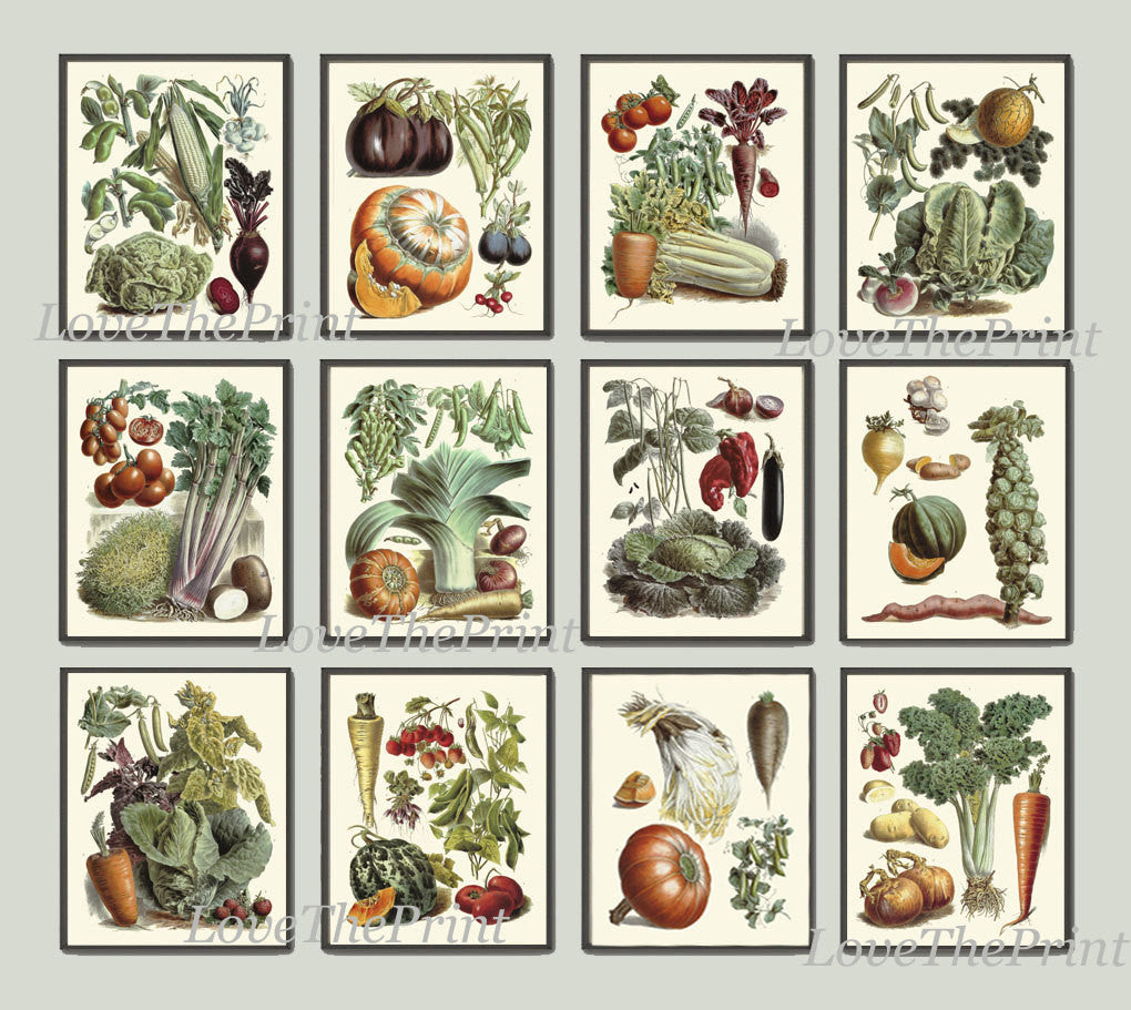 Botanical Vegetable Print Set of 12 Art  Redoute Antique Beautiful Pumpkin Cabbage Illustration Kitchen Dining Room Garden Wall Decor