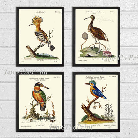 Bird Print Set of 4 Art  Antique Beautiful Blue Red Birds Kingfisher Ibis Nature Book Plate Dining Living Home Room Office Wall Decor