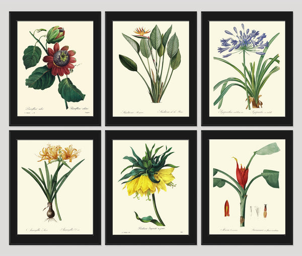 Botanical Tropical Flower Art Print SET of 6 Art  Redoute Antique Living Dining Room Bedroom Kitchen Hallway Home Wall Decor to Frame