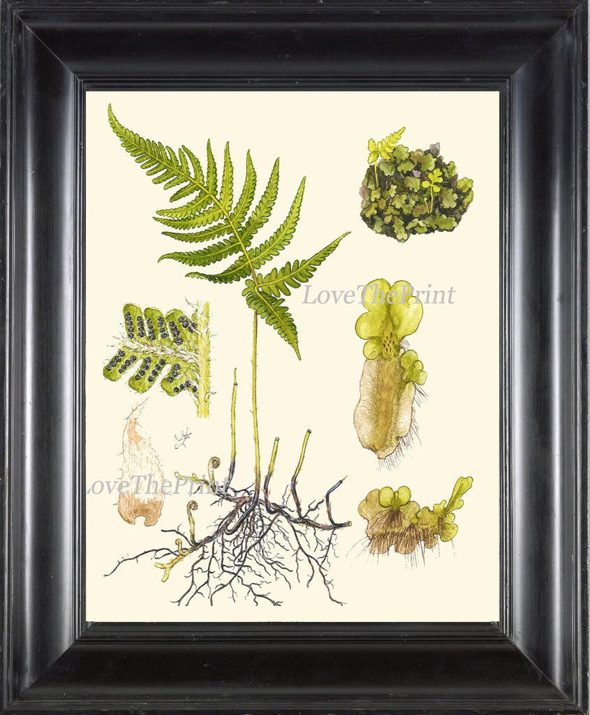 Antique Fern Art Print 9 Lindman Botanical Antique Beautiful Green ...