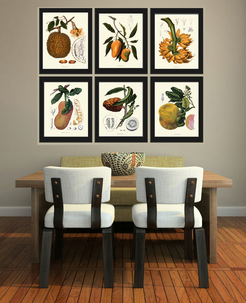 Tropical Fruit Art Print 27  Botanical Beautiful  Cempedak Large Breadfruit Summer Garden Home Illustration Picture Room Wall Decor BHN