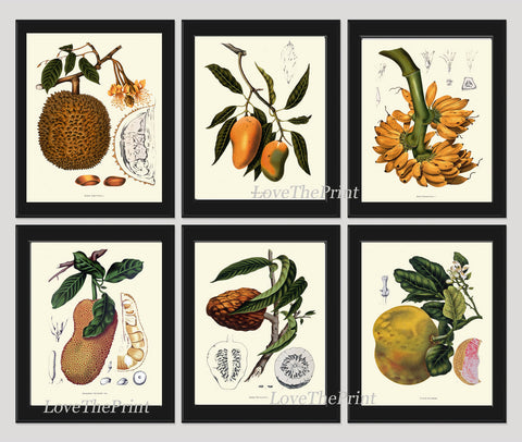 Fruit Print Set of 6 Art  Antique Botanical Beautiful Large Banana Mango Grapefruit Citrus Tree Flowers Tropical Home Wall Decor BHN