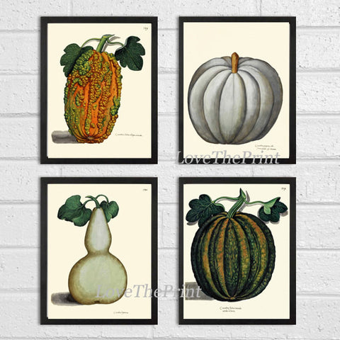 Pumpkin Print Set of 4 Art Prints Beautiful Antique Botanical Illustration Orange Green White Gourd Squash Fall Garden Wall Home Decor ALD