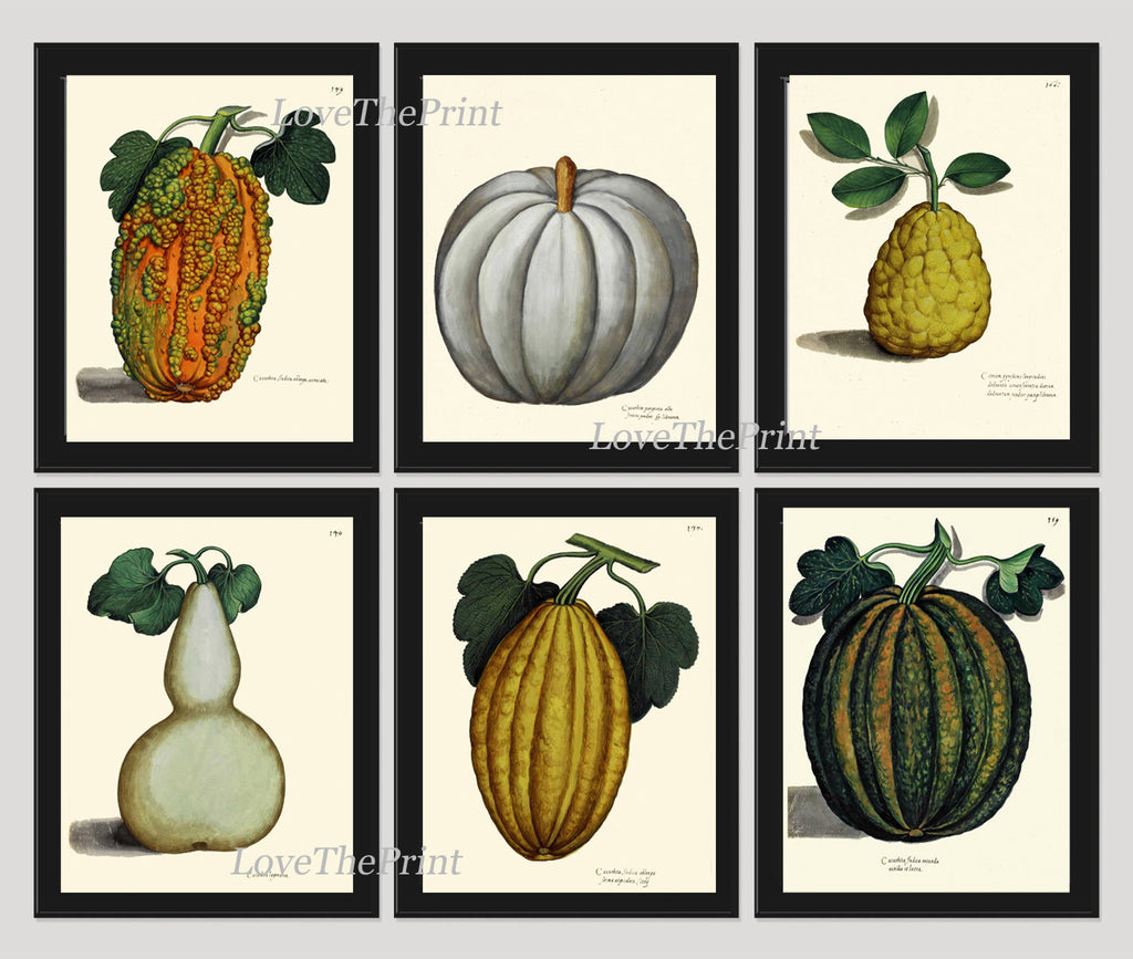 Pumpkin Print Set of 6 Art Prints Beautiful Antique Botanical Illustration Orange Green White Gourd Squash Fall Garden Wall Home Decor ALD