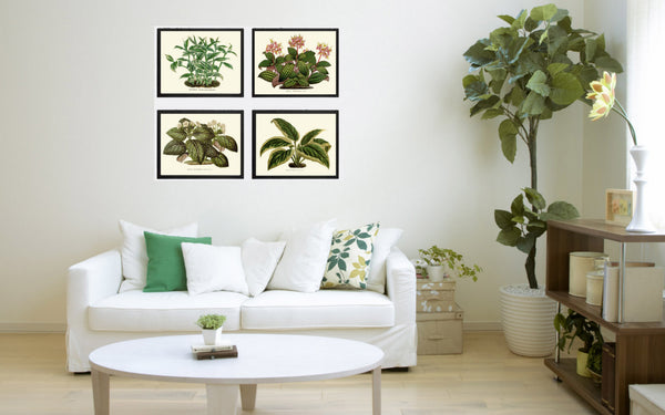 House Plant Print Set of 4 Botanical Art Beautiful Antique  Illustration Home Decor Green Wall Decor Plant Leaf Flowers 4x6 5x7 8x10 11x14
