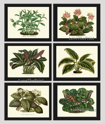Antique Green Plant Art Print Set of 6 Beautiful Botanical Picture Illustration Home Green Wall Decor Plant Leaf Flowers Large Poster Chart