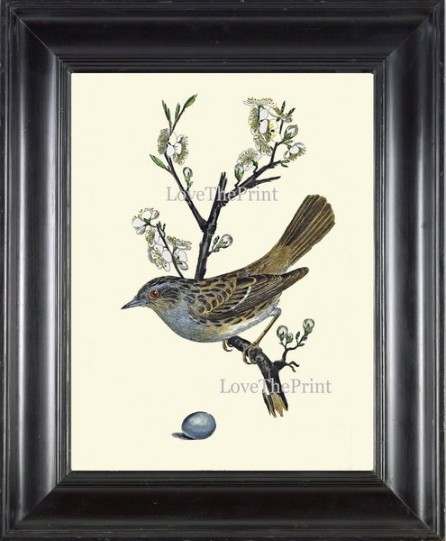 Bird Print Art 4 Beautiful Antique Songbird Blue Bird Egg White Flowers Tree Botanical Green Nature Garden Wall Home Room Decor to Frame CJ