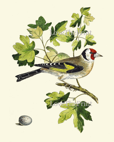 Antique Bird Egg Print Art 7 Beautiful Red Yellow Songbird Green Tree Botanical Bookplate Green Nature Wall Home Room Decor to Frame CJ