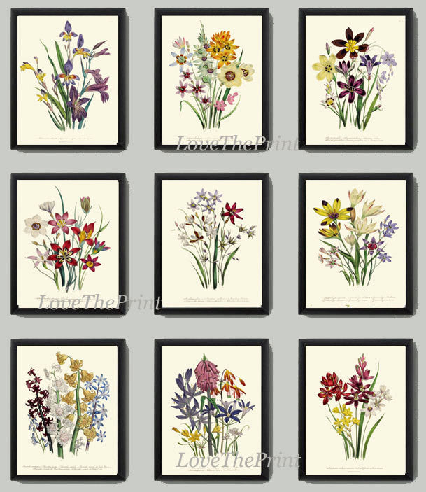 Antiqie Botanical Print SET of 9 Art Loudon Antique Beautiful Wildflower Flowers Yellow Purple Green Summer Plant Nature Home Wall Decor