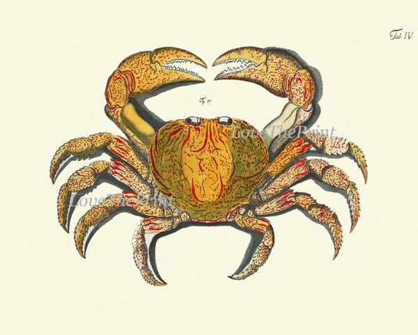 Crab Print Wall Art 6 Beautiful Antique Sea Ocean Nature to Frame Beach Home Seaside Nautical Marine Decor Interior Design Wall Hanging