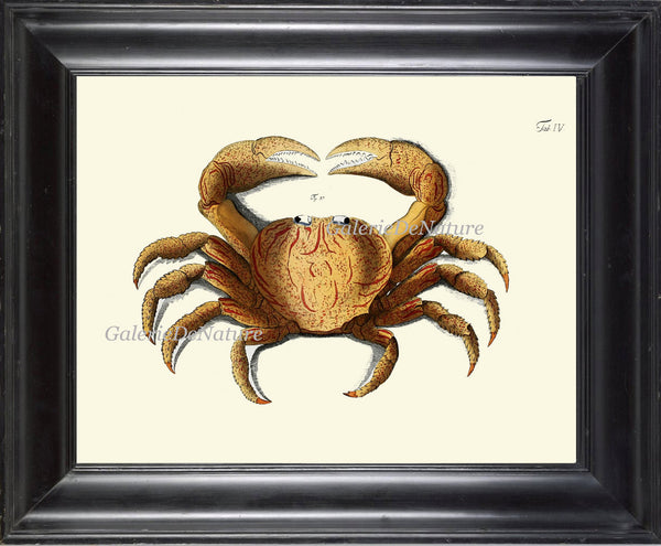 Antique Crab Print Wall Art 14 Beautiful Antique Sea Ocean Nature Beach Home Seaside Nautical Marine Decor Natural Science Wall Hanging