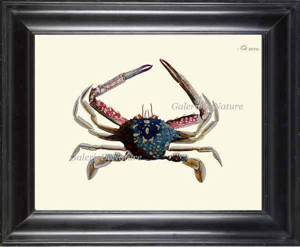 Crab Print 33 Beautiful Antique Blue Red Sea Ocean Nature Beach Home Seaside Marine Vintage Home Room Decor Illustration Beach Decoration