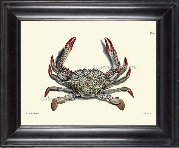 Crab Print 40 Beautiful Antique Sea Ocean Nature Beach Home Vintage Bathroom Bedroom Illustration to Frame Wall Art