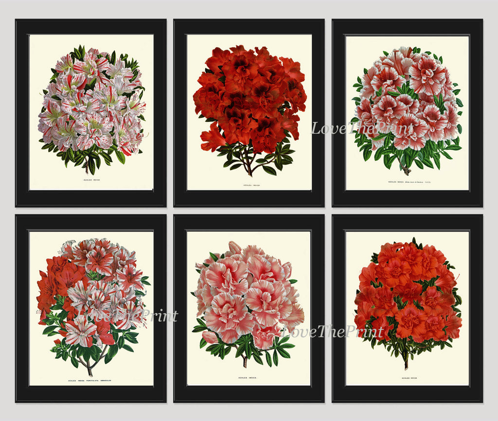 Antique Botanical Print Set of 6 Flowers Art Beautiful Large Azalea Plants Spring Summer Garden Nature Vintage Wall Home Decor