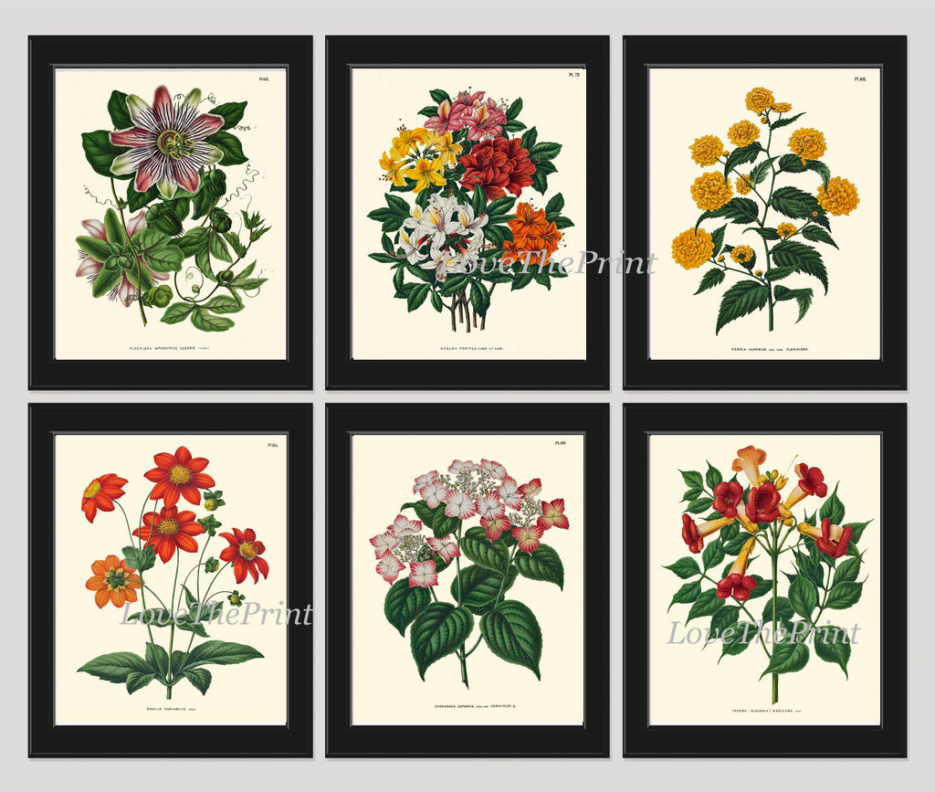 Botanical Print Set of 6 Flowers Wall Art Beautiful Antique Colorful Plants Garden Nature Vintage Illustration Pretty Room Home Decor