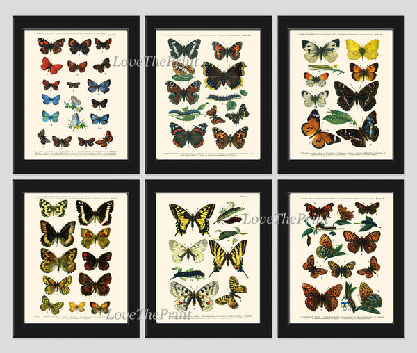 Antique Butterfly Print SET of 6 Wall Art Prints Beautiful Antique  Butterlies Home Room Decor Decoration Garden Nature Interior Desing