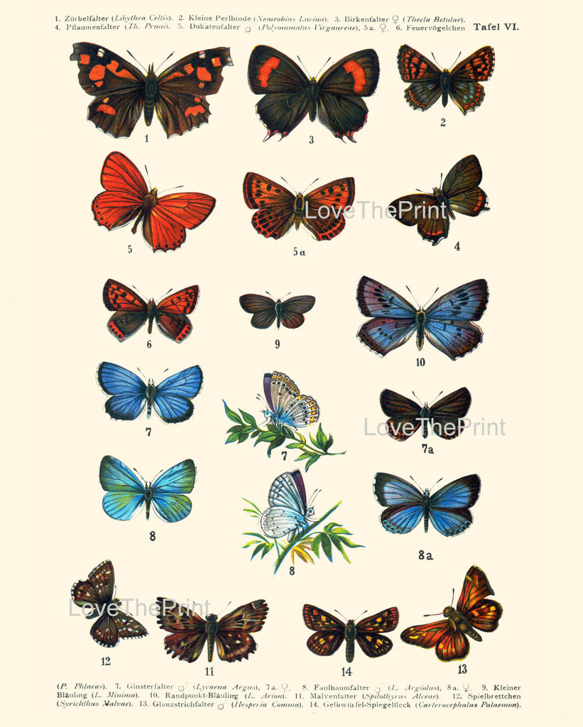 Set of 12 Antique Butterfly Prints Insect Spring Garden Home Decor Wall Hanging