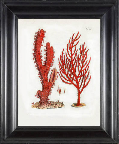 CORAL PRINT Ellis  Art Print 3 Beautiful Antique Sea Ocean Red Coral Nature to Frame Home Decoration Wall Hanging