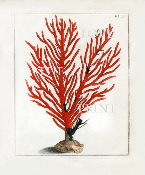 CORAL PRINT Ellis  Art Print 6 Beautiful Antique Sea Ocean Red Coral Nature to Frame Home Decoration Wall Hanging
