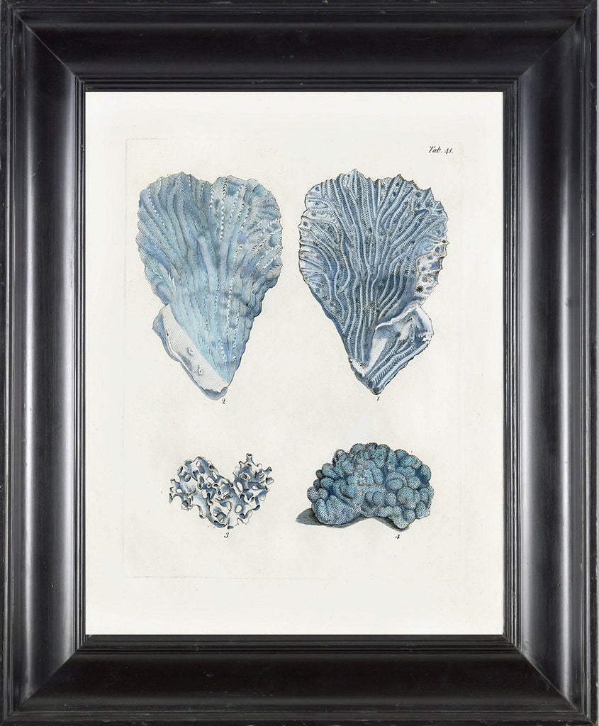 CORAL PRINT Ellis  Art Print 16 Beautiful Antique Sea Ocean Blue Coral Nature to Frame Home Decoration Wall Hanging