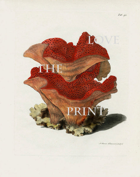 CORAL PRINT Ellis  Art Print 5 Beautiful Antique Sea Ocean Red Coral Nature to Frame Home Decoration Wall Hanging