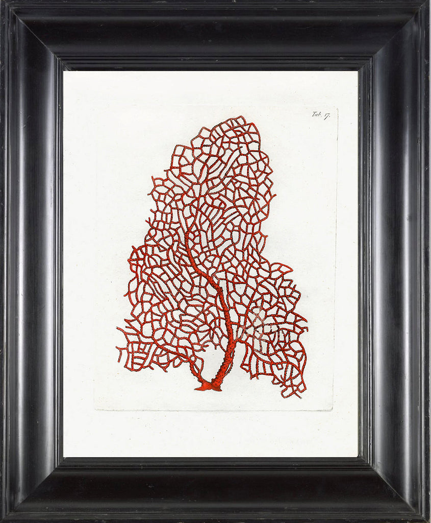 CORAL PRINT Ellis  Art Print 25 Beautiful Antique Sea Ocean Red Coral Nature to Frame Home Decoration Wall Hanging