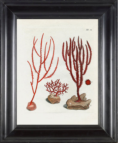 CORAL PRINT Ellis  Art Print 21 Beautiful Antique Sea Ocean Red Coral Nature to Frame Home Decoration Wall Hanging