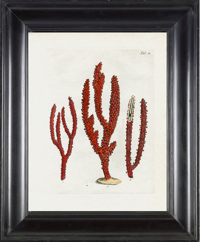 CORAL PRINT Ellis  Art Print 22 Beautiful Antique Sea Ocean Red Coral Nature to Frame Home Decoration Wall Hanging